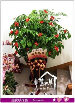 旺旺樹 106102803