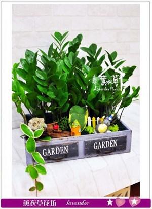 金錢樹組合盆栽b072210