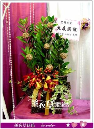 金錢樹組合盆栽-星星款-y32308