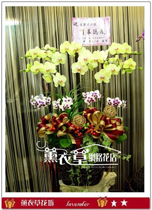 高雅蝴蝶蘭禮盆y8159