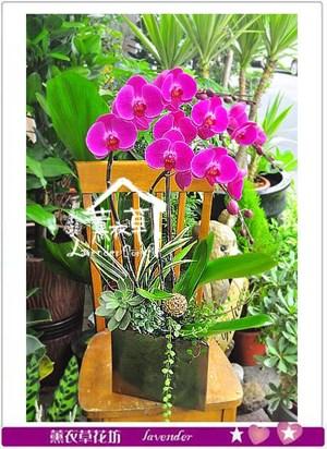 蝴蝶蘭設計 106050205