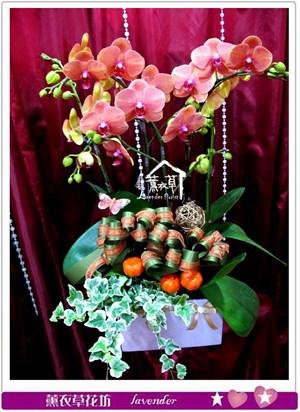 高雅蝴蝶蘭c051206
