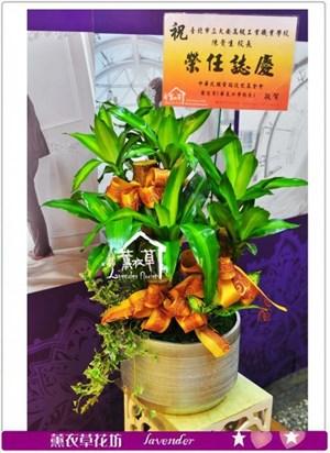 台北花店-D145巴西組合盆栽