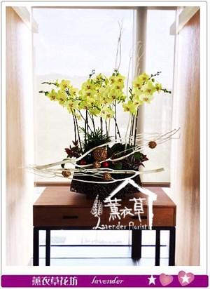 高雅蝴蝶蘭106091007