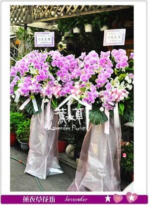 蝴蝶蘭花藍設計 106022005