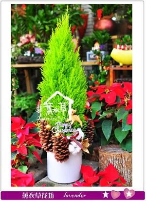 聖誕設計B113016