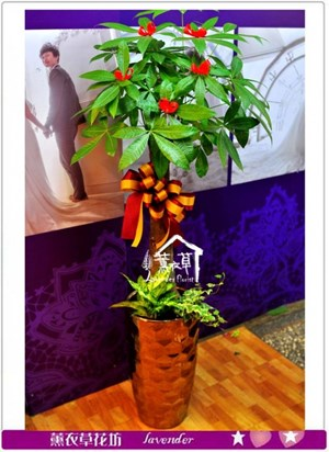 發財樹盆栽a011911