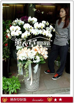 蝴蝶蘭禮盆10株y3935