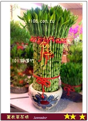 開運竹盆栽B101