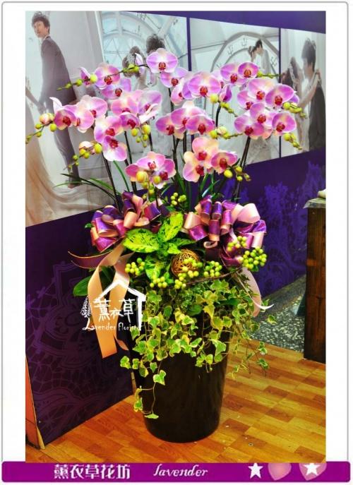 高雅蝴蝶蘭A110205