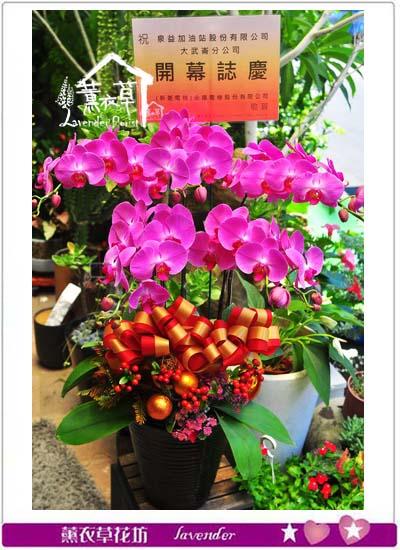 蝴蝶蘭/蘭花禮盆 107080713