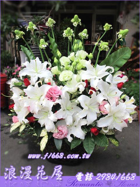 盆花 F42