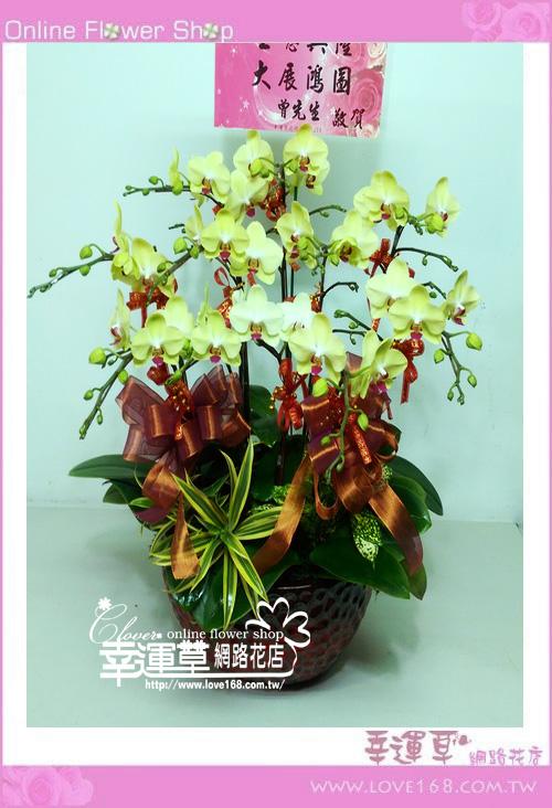 D1224優質蘭花10株