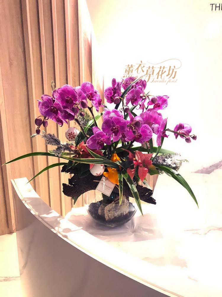 蝴蝶蘭&玻璃缸設計108112105