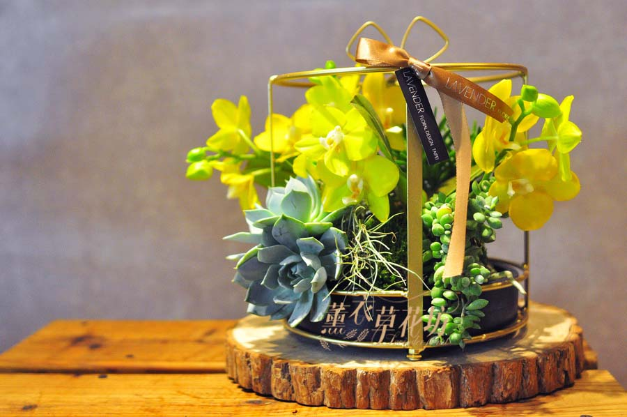 多肉植物&黃金蝴蝶蘭設計108041005