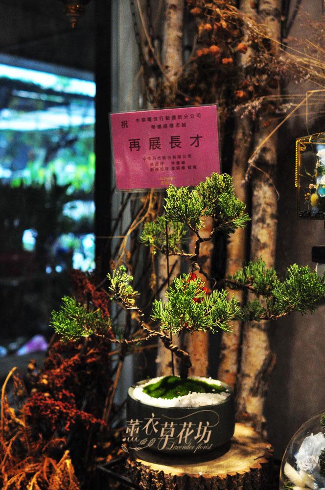 松柏盆栽 106122901