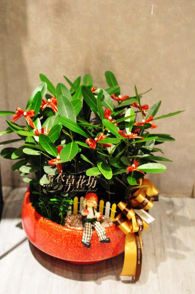 龍珠盆栽c100111