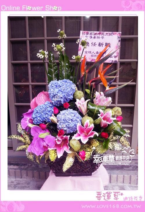 C55優質盆花