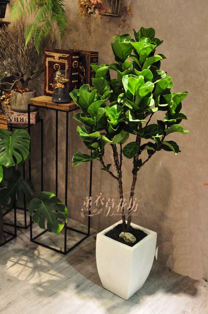 琴葉盆栽 108081602