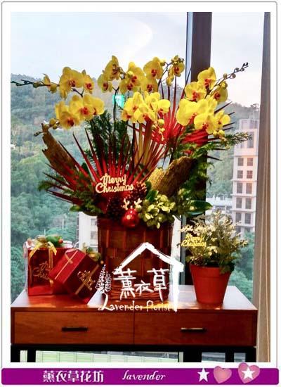 黃金蝴蝶蘭 設計 106121411