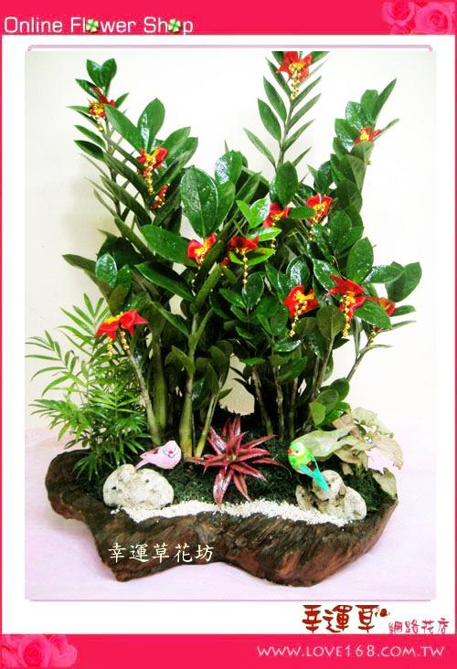 E57金錢樹組合盆栽