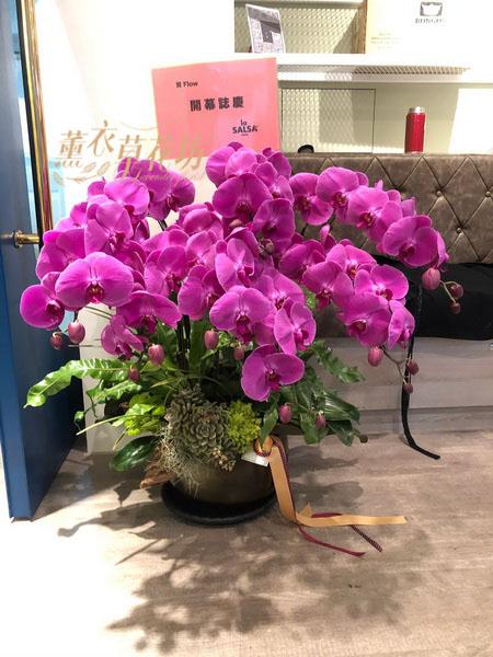 高雅蝴蝶蘭/蘭花/盆栽108032208