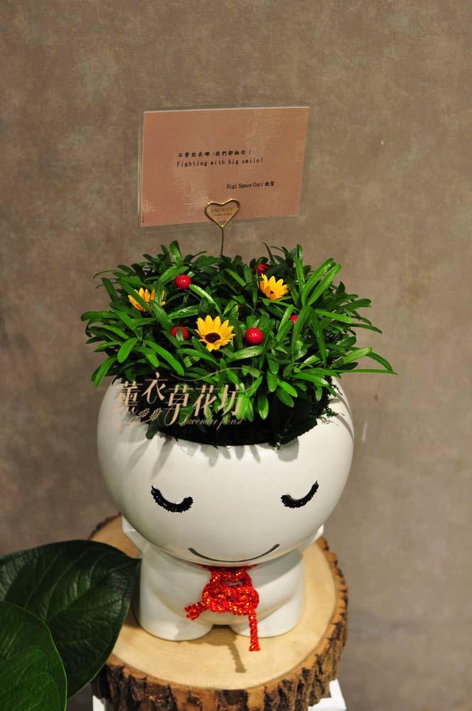 羅漢松組合盆栽y20323