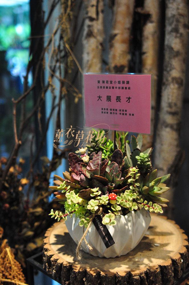 多肉植物設計109033011