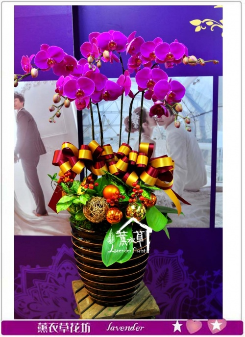 高雅蝴蝶蘭a011707