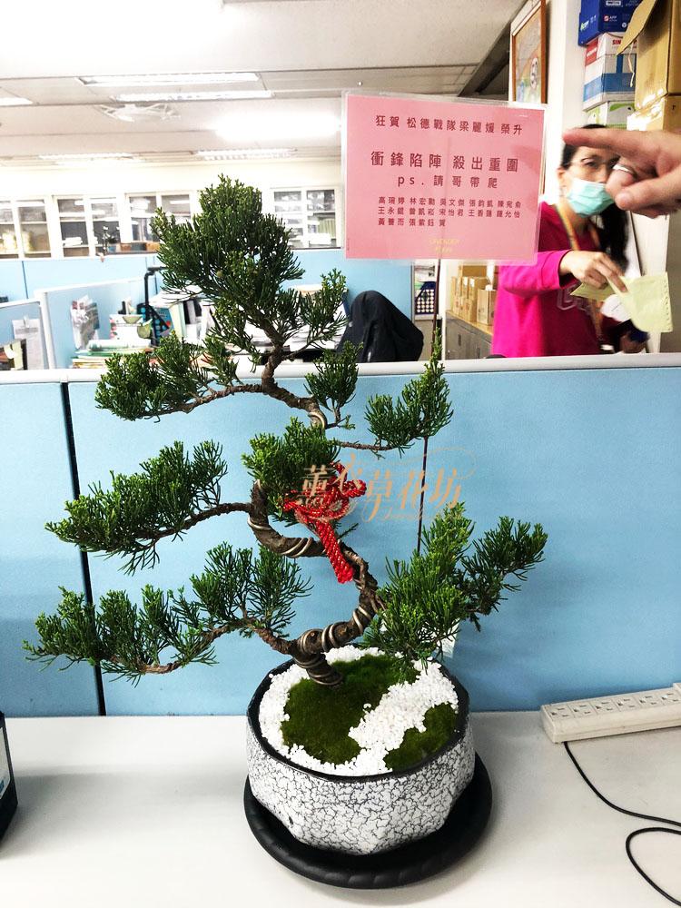 松柏盆栽 110012203
