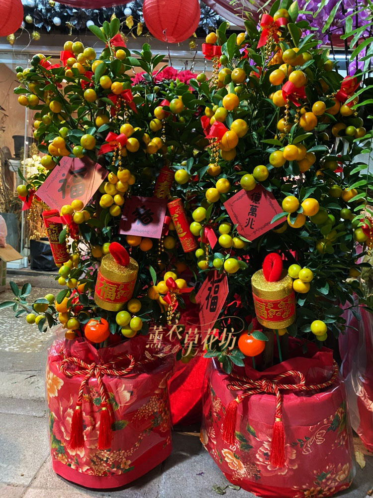 金桔樹盆栽一盆 109011525