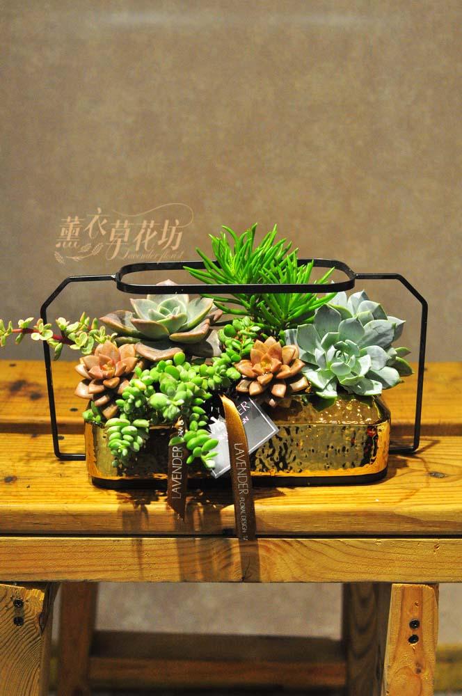 多肉植物設計一盆 108041116-缺貨