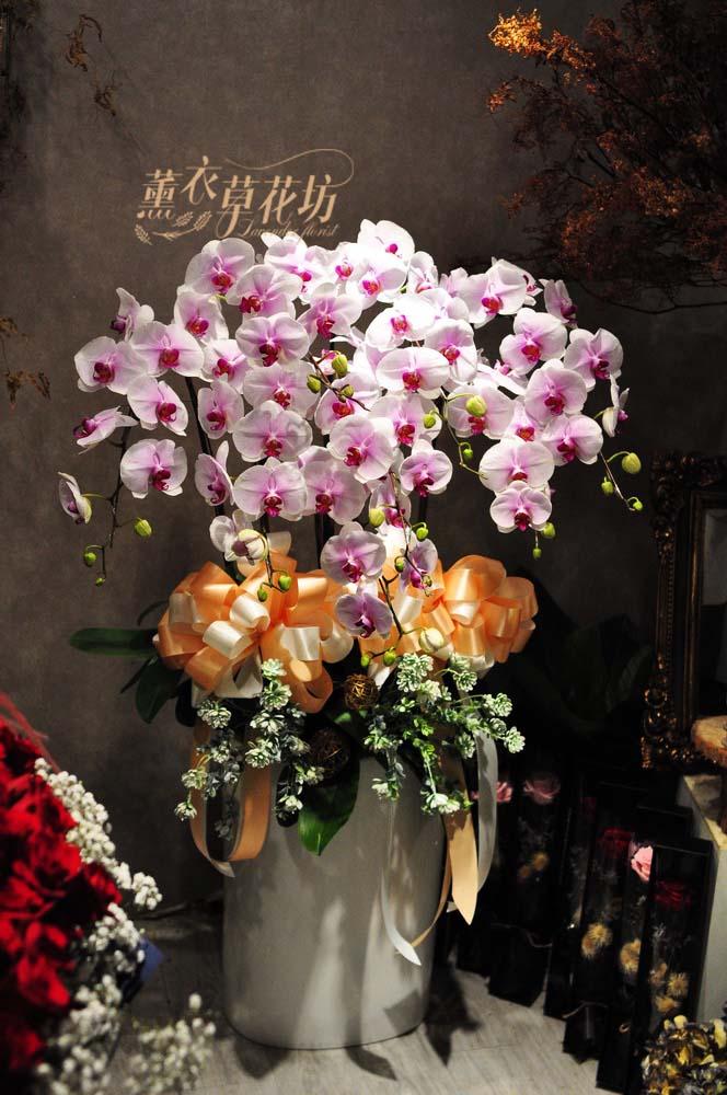 高雅蝴蝶蘭設計108120510