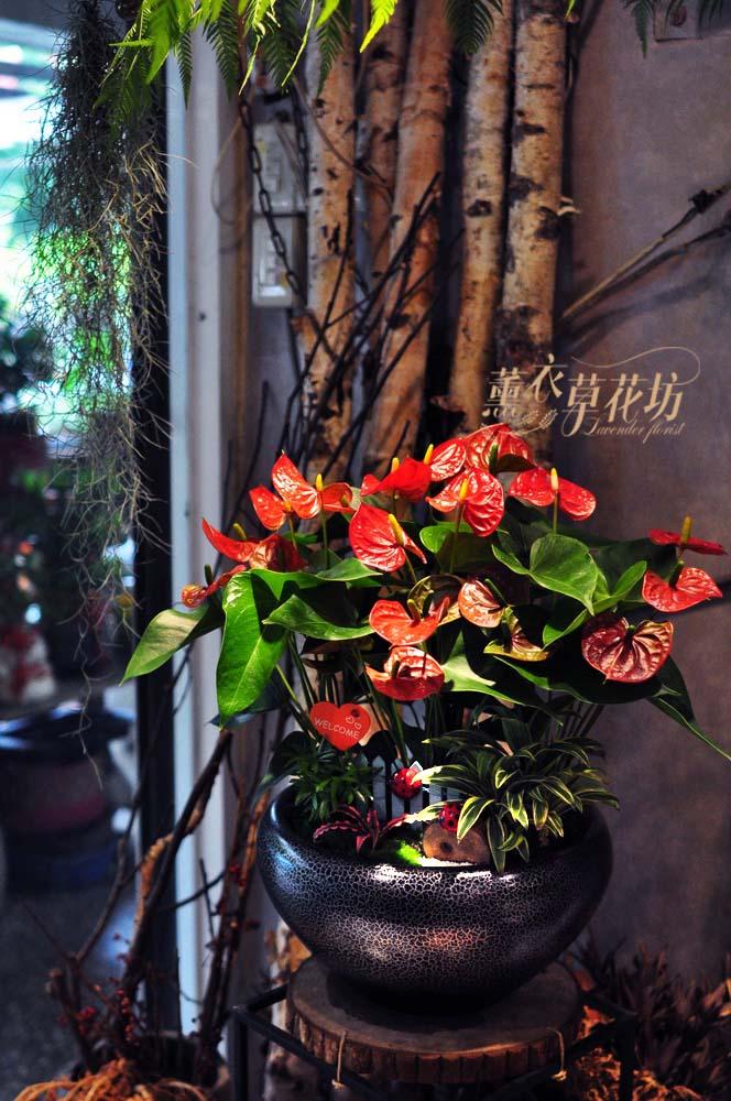 迷你火鶴盆栽設計108101815