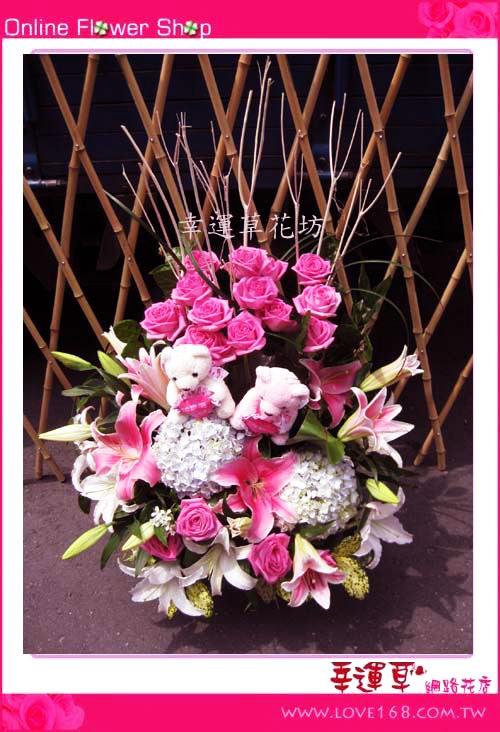 C23優質盆花