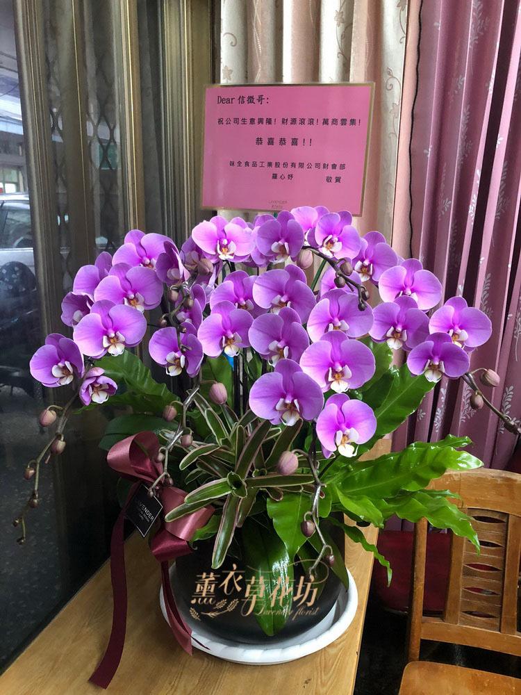 蝴蝶蘭/蘭花/開幕/高升/展覽109060115