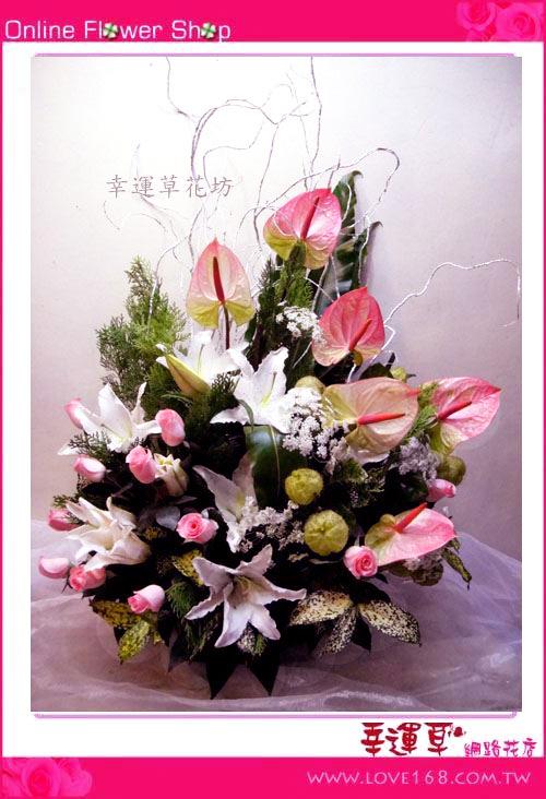 C502優質盆花