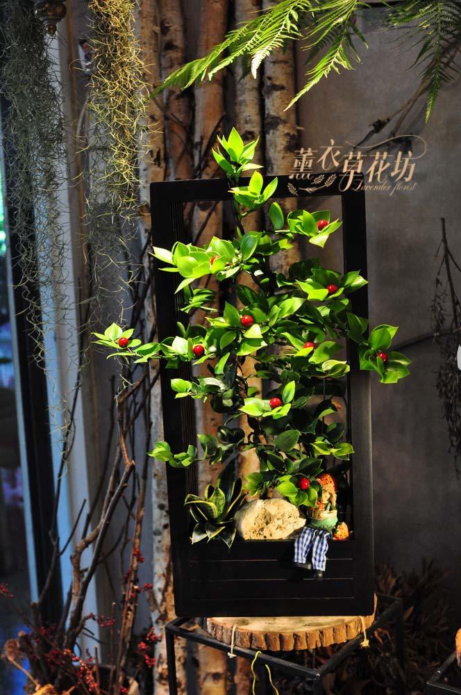 日本竹柏盆栽設計108082510