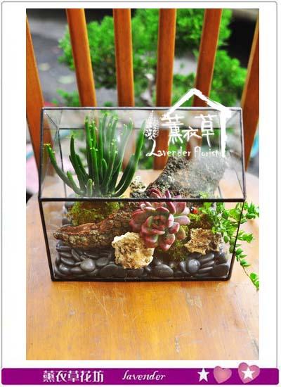 缺貨-生態缸設計~房子款106020407