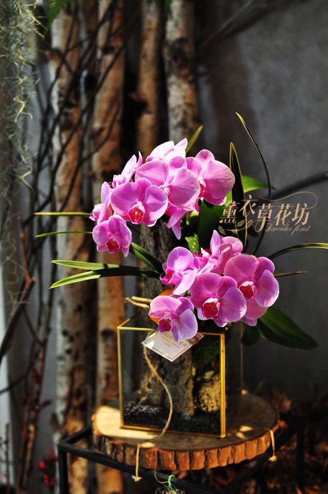 缺貨-蝴蝶蘭&玻璃缸設計 108082906
