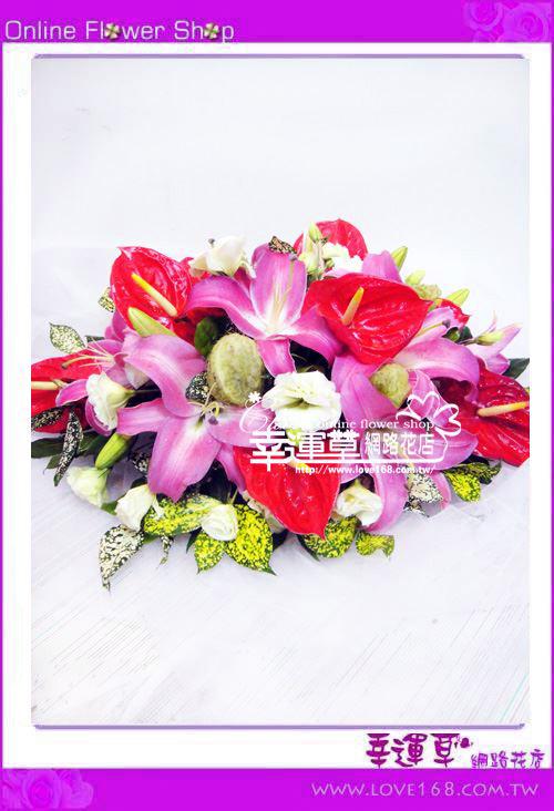 C27優質盆花