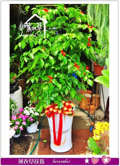 旺旺樹 107053009