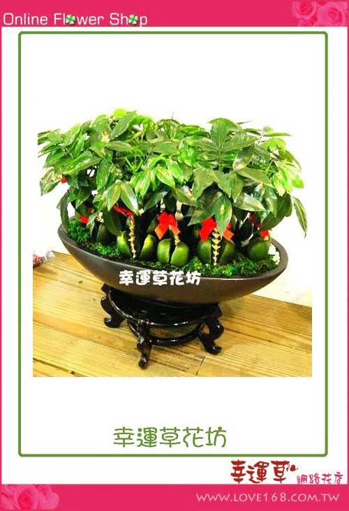 E504綠寶石盆栽