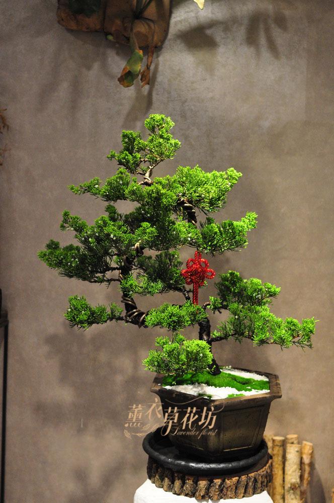 松柏盆栽 109052204