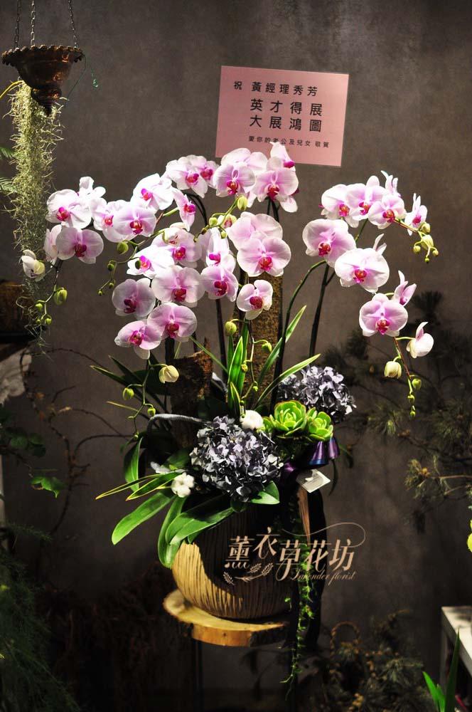 高雅蝴蝶蘭設計108083011