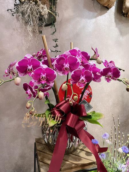 蝴蝶蘭設計一盆 11001208