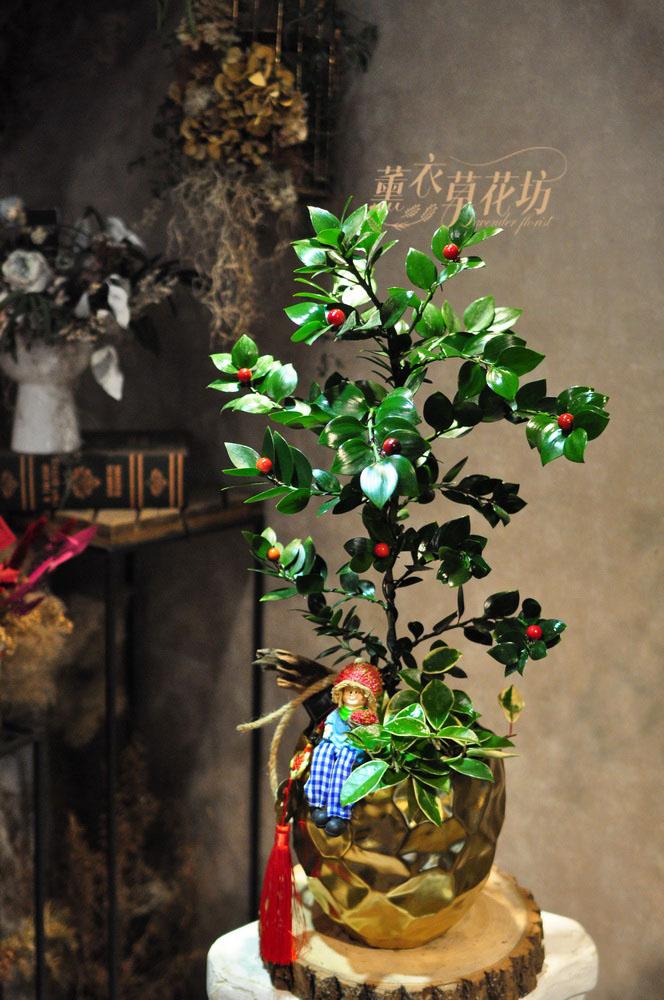 日本竹柏盆栽設計 110012109