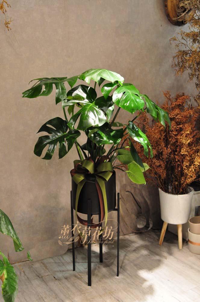 缺貨-蔓綠容盆栽設計108103106