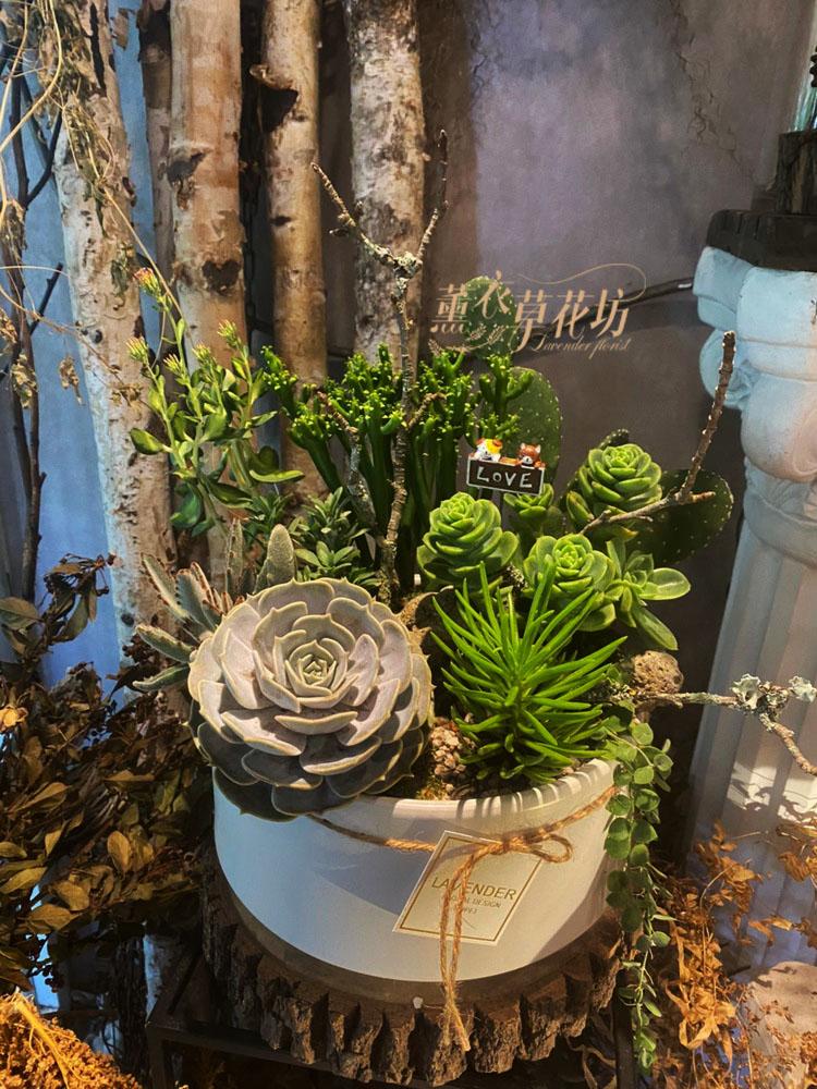 多肉植物盆栽設計 109110608