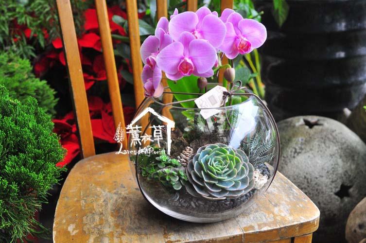 蝴蝶蘭&多肉設計 106080107